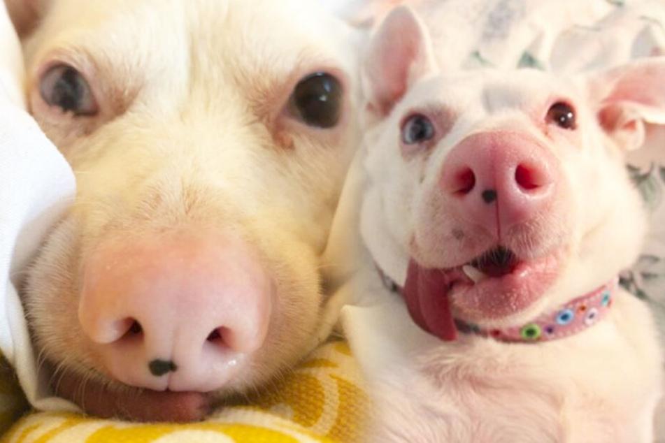 Hund oder Schwein? Das ist bei diesen Bildern die Frage.