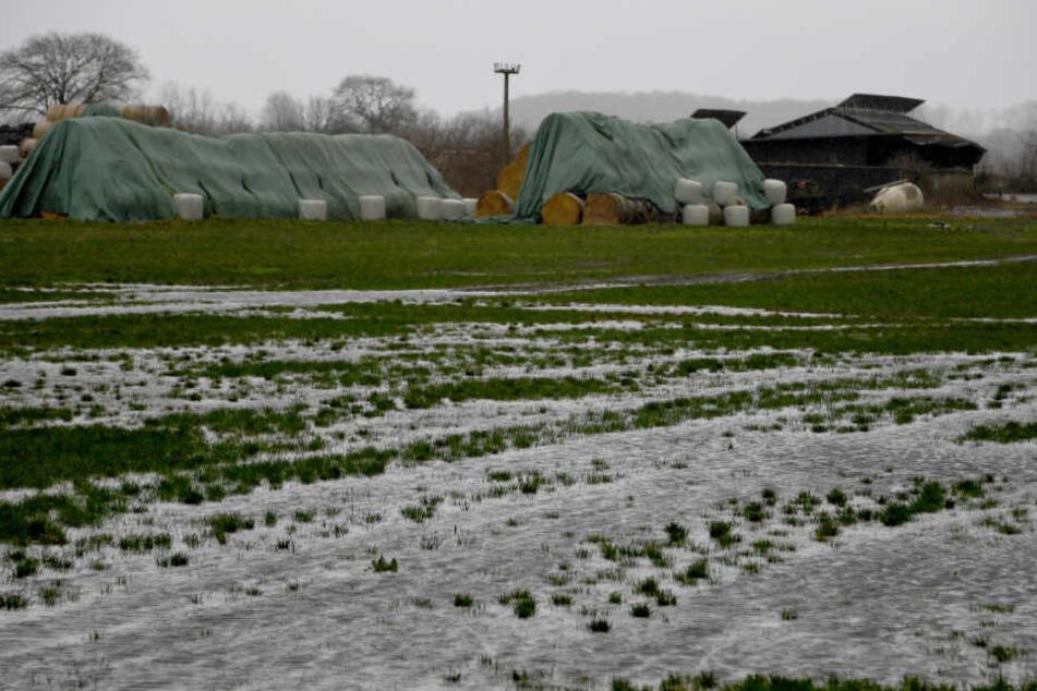 Landwirte im Norden müssen mit viel Regen auf ihren Feldern klarkommen.