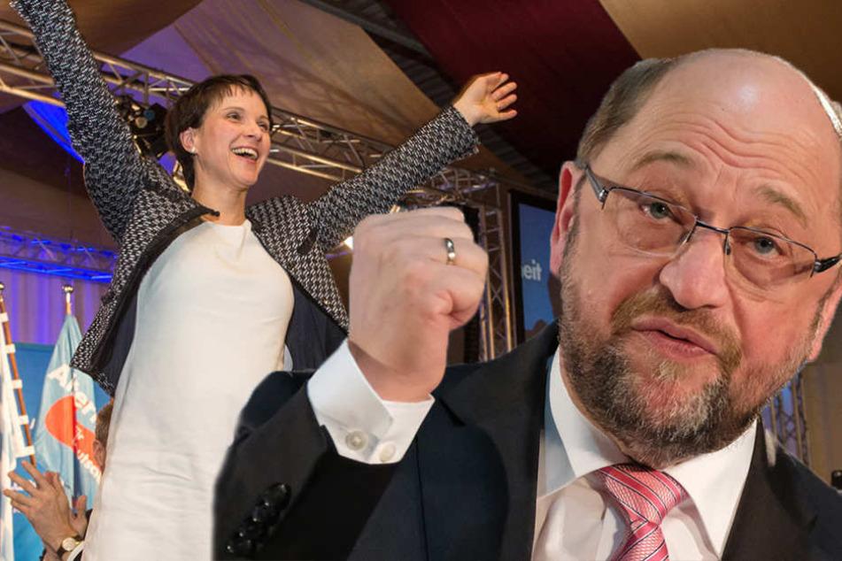 """AfD-Chefin Petry bezeichnet Martin Schulz als """"Tagegeld-Erschleicher"""""""