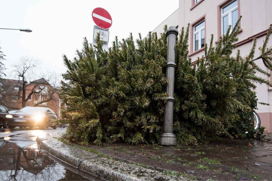 Die Feuerwehr mahnt: Christbäume sind inzwischen in der Regel sehr trocken und leicht entzündlich.