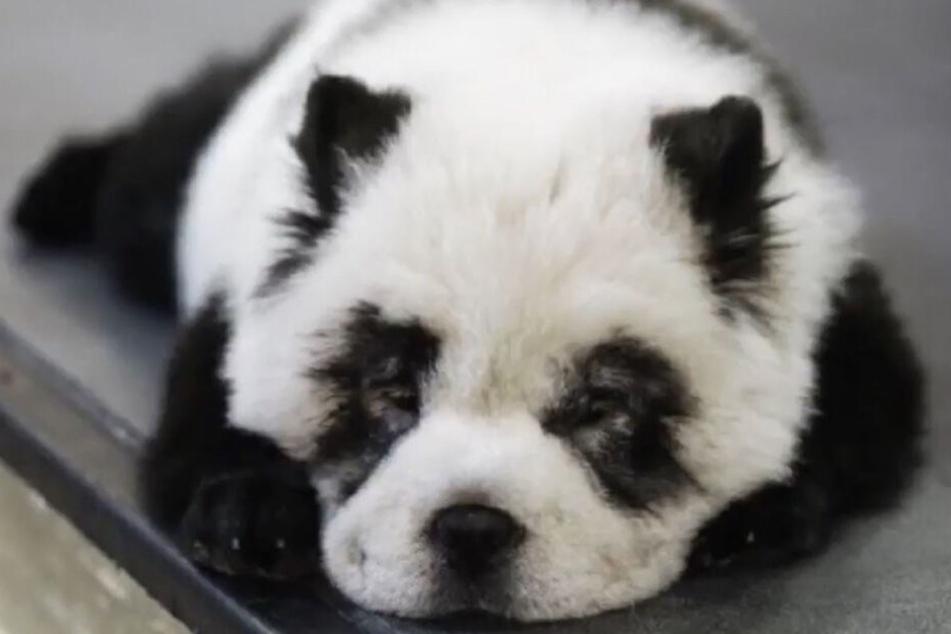 Hund oder Panda? Das ist hier die Frage...