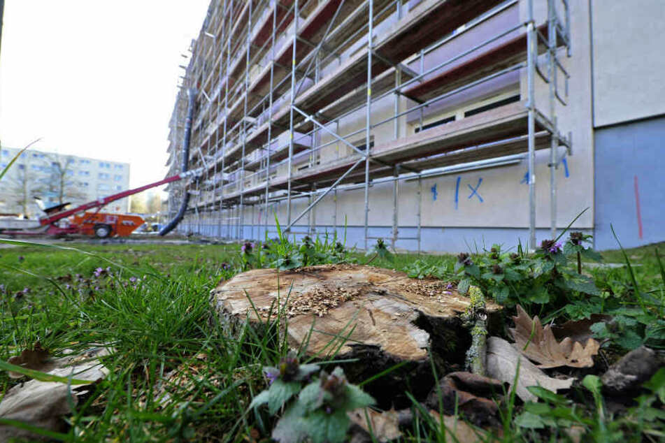 Weil Balkone angebaut werden, mussten Bäume in der Paul-Bertz-Straße weichen.