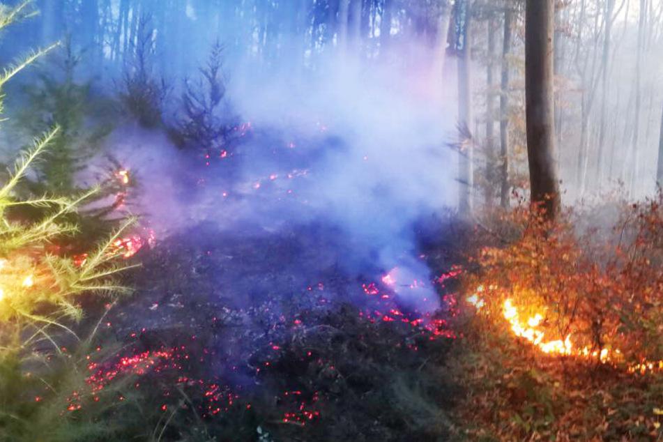 Flugzeugpiloten entdecken Waldbrand und funken SOS, 130 Feuerwehrleute im Einsatz