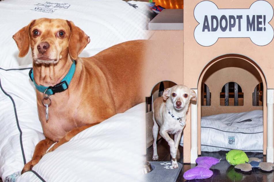 In diesem Hotel wird (fast) jede Woche ein Hund adoptiert