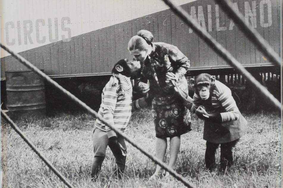 Nach dem Unfall in der Raubtiergruppe widmete sich Sonja Müller-Milano pfiffigen Schimpansen.