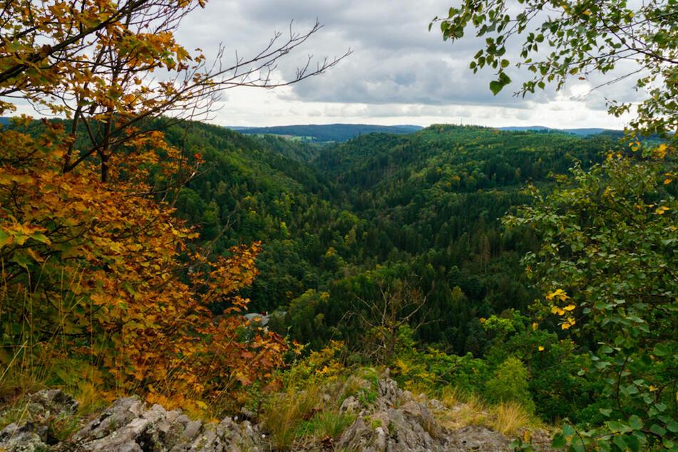 Dieser Wald ist mit am stärksten bedroht in Deutschland: Hilft ein Betretungsverbot?