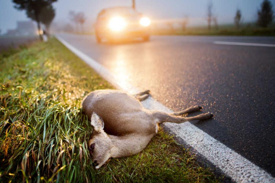 Ein totes Reh liegt nach der Kollision mit einem Auto am Straßenrand einer Landstrasse.