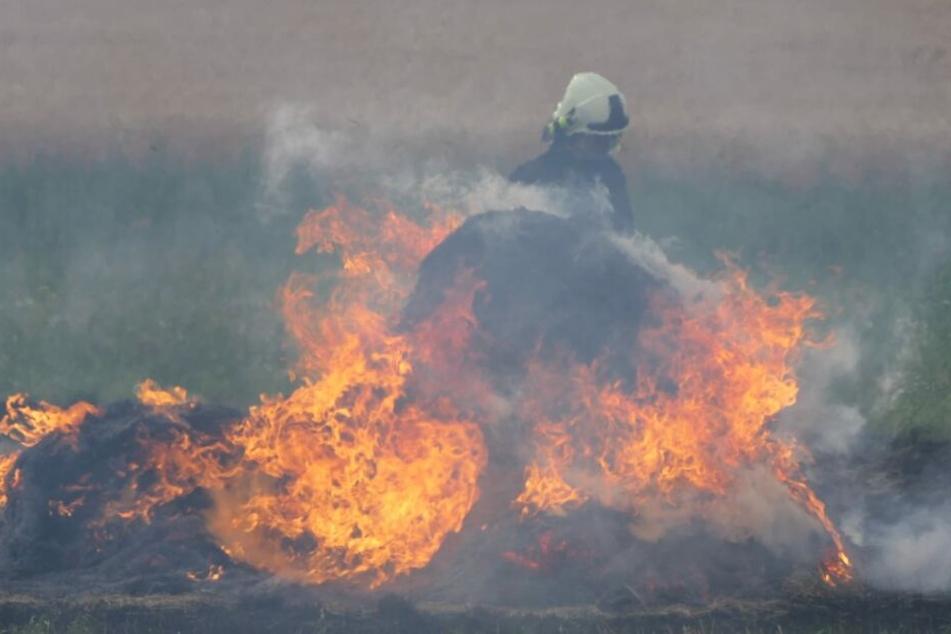 Die Flammen drohten von zwei Strohballen auf ein Weizenfeld überzugreifen.