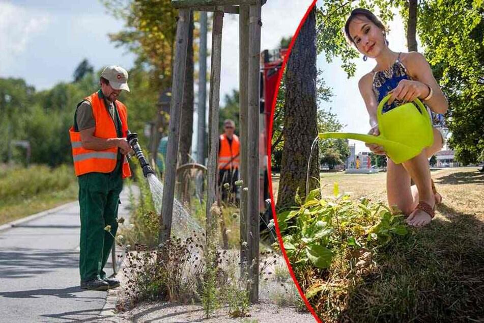 Mega-Hitze in Chemnitz: Bürger sollen Bäume bewässern!