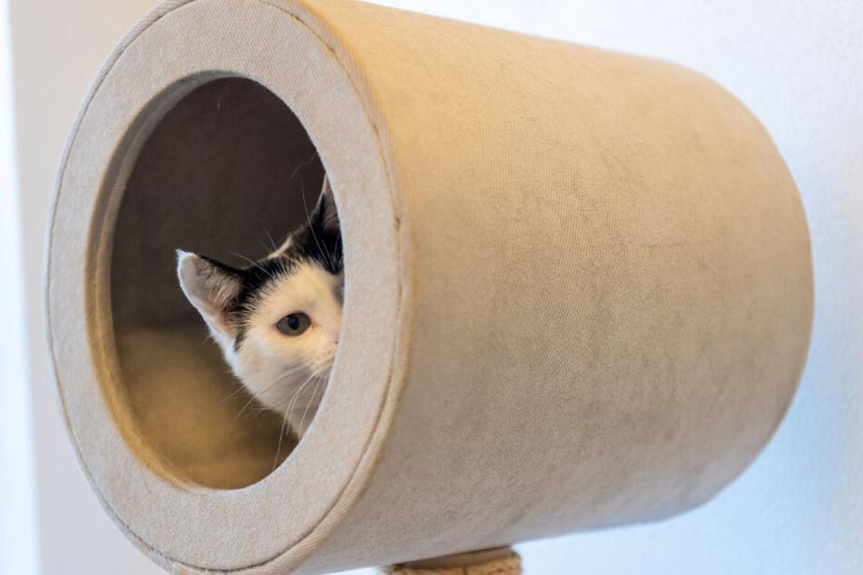 Eine Katze schaut im Tierheim München aus ihrer Höhle.