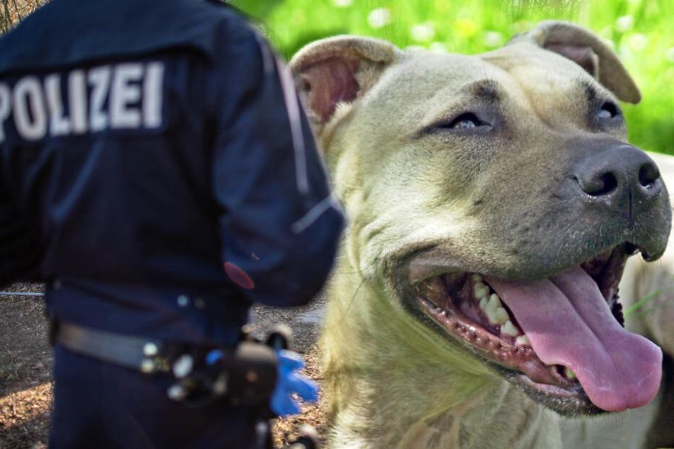 Hund bellt bis die Polizei kommt: Beamte entdecken ermordete Frau in Bielefeld