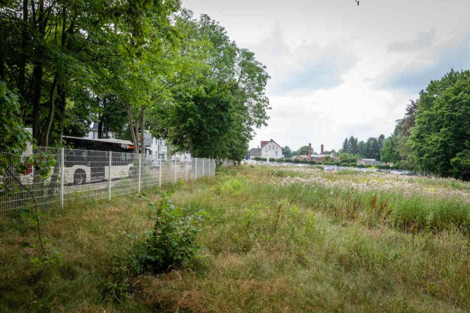 Unkraut statt Bäumen: Eine ungenutzte Brachfläche an der Zwickauer Straße.