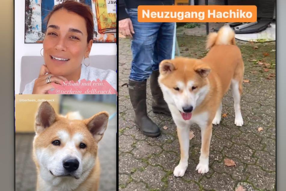Jana Ina Zarrella (43) sucht in einer Instagram-Story ein neues Zuhause für Hachiko. (Fotomontage)