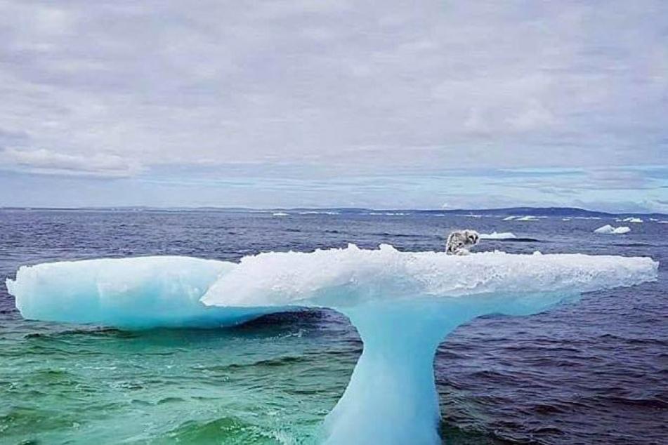 Was sitzt da auf dem merkwürdigen Eisberg?