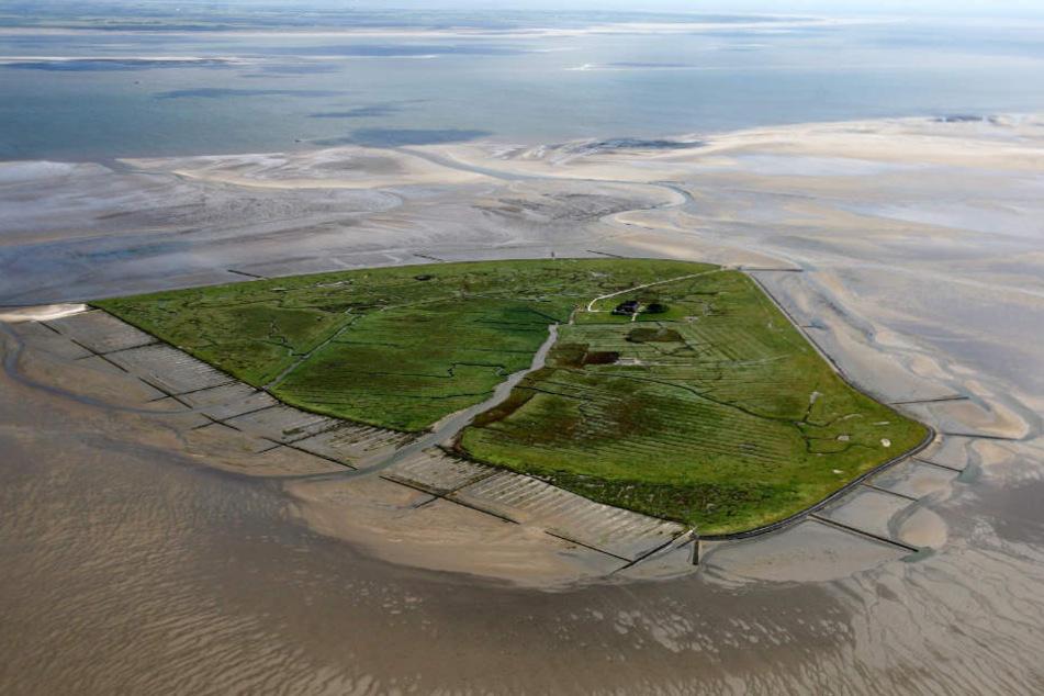Die Hallig Süderoog liegt in der Nordsee bei Pellworm. Dort gibt es nur einen Hof.