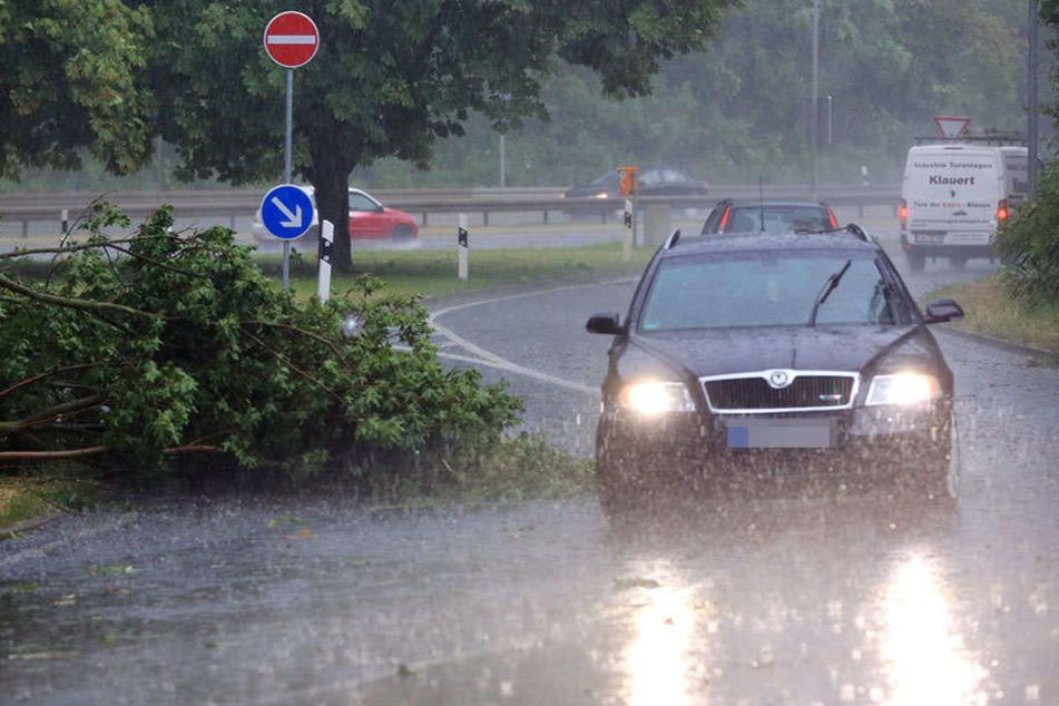 In und um Magdeburg wurden am Donnerstag zahlreiche Bäume entwurzelt.