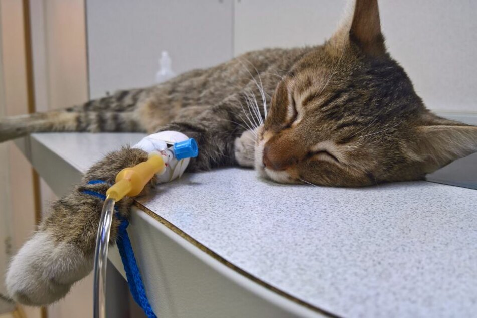 Auch bei Tier-Notfällen zählt oft jede Sekunde. (Symbolbild)