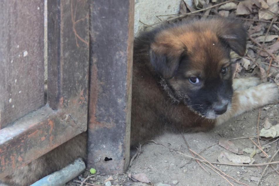 Brüder horten 140 Tiere in Ekel-Haus: Darunter Hunde, Pferde, und Kängurus!