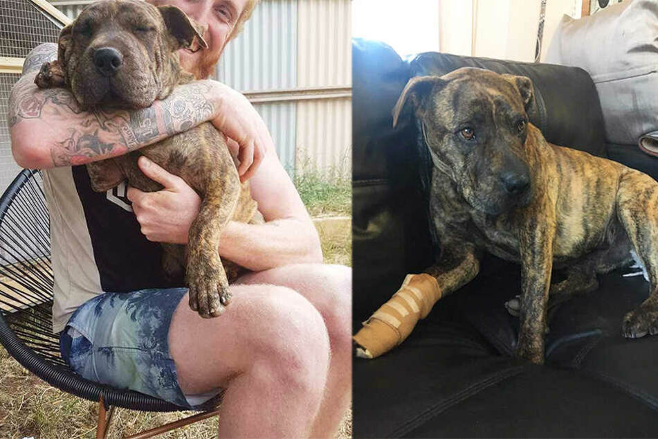 Hennesy freut sich auf seinen Hund, den er vor zwei Jahren einst so knuddelte.