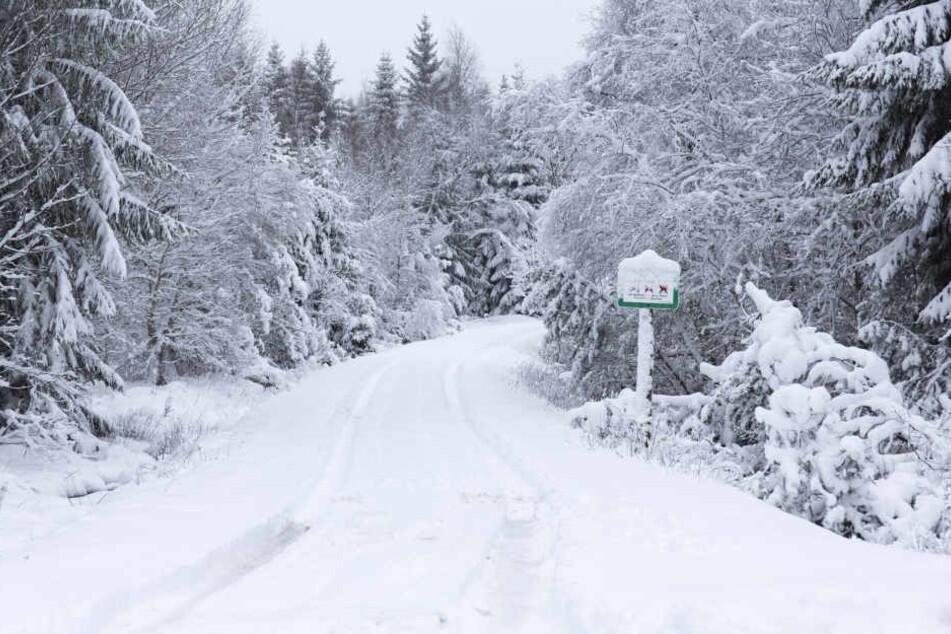 Neuschnee bei Reitzenhain.