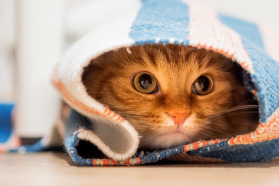 Ist Deine Katze beleidigt? Wir verraten, warum Miezen schmollen!