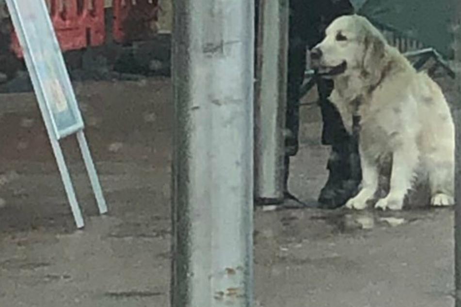 Hund steht allein im Regen, bis ihm jemand hilft