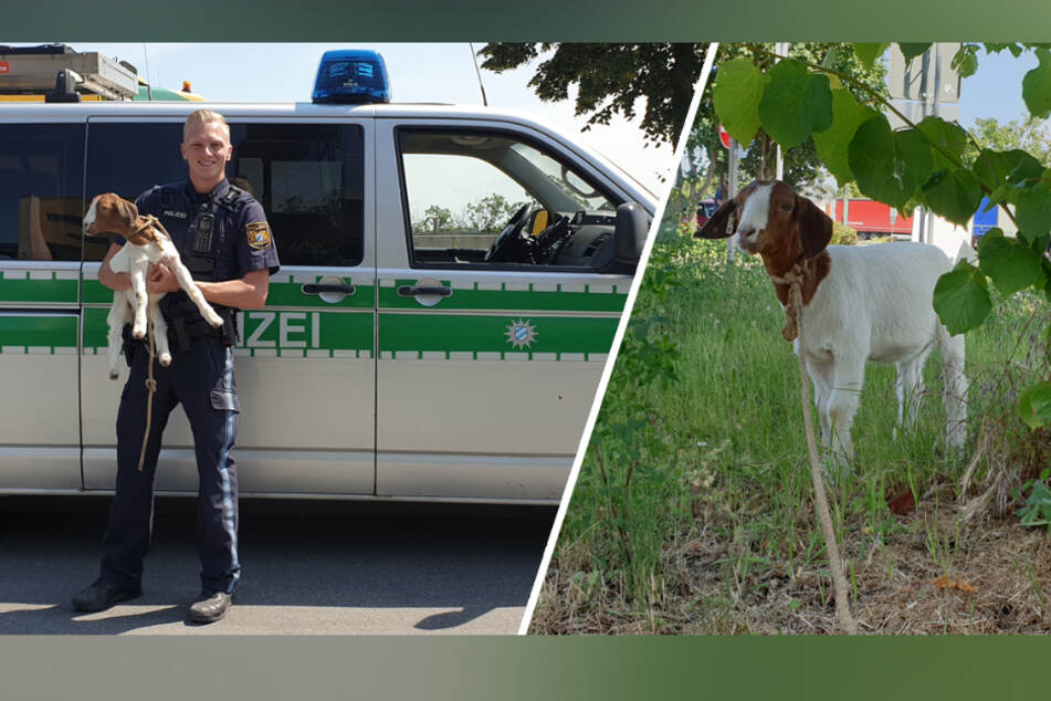 Coole Ziege sorgt auf Autobahn-Rastplatz für außergewöhnlichen Polizeieinsatz