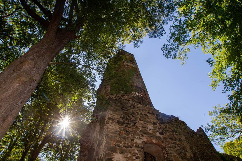 Grausamer Fund im Vogtland: Spaziergänger entdecken Babyleiche