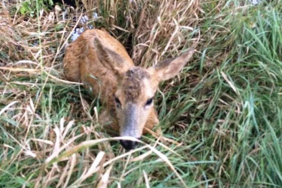 Nach der Rettung der Feuerwehr war Bambi zwar erschöpft aber unverletzt.