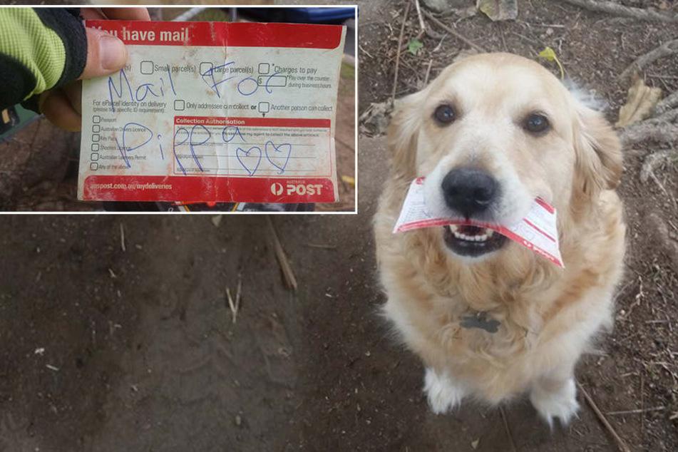 Dieser Hund bekommt Liebes-Briefe von einem Postboten