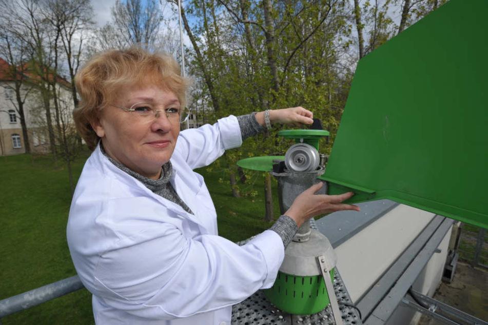 Valentina Aurich (63) betreut die Pollen-Mess-Station der  Landesuntersuchungsanstalt in der Zschopauer Straße.