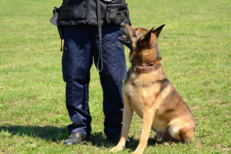 Der Polizeihund beging einen seltenen Fehler. (Symbolbild)