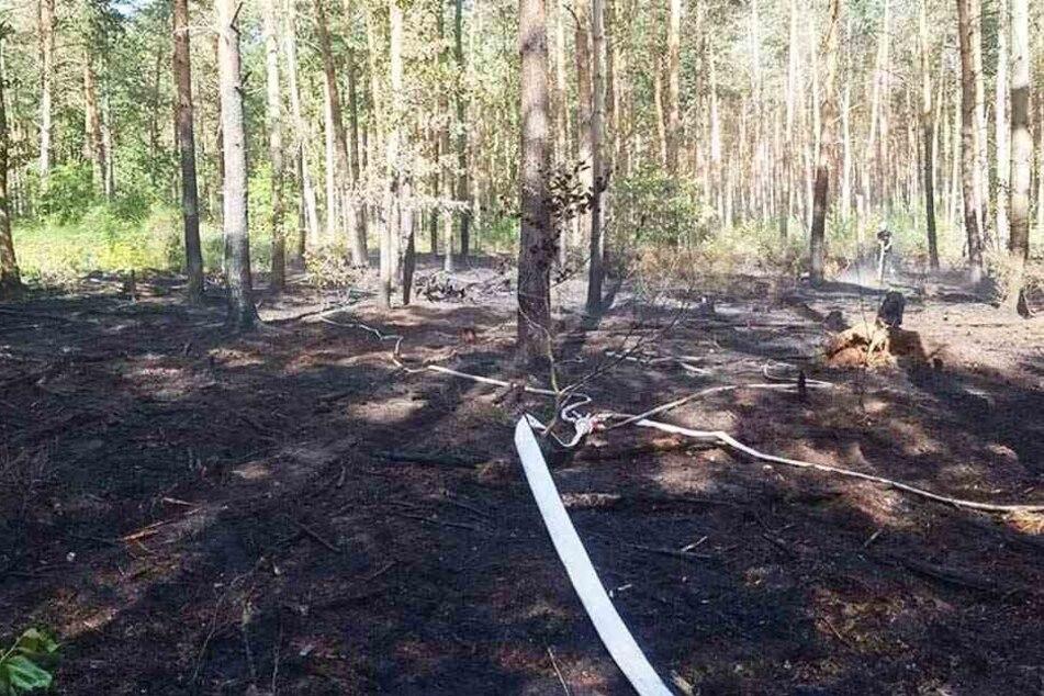 Mehrere Feuer gelegt: War hier ein Brandstifter am Werk?