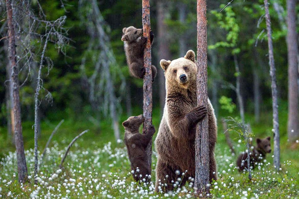 Aus diesem Grund lebte ein Mann 24 Jahre unter Bären im Wald