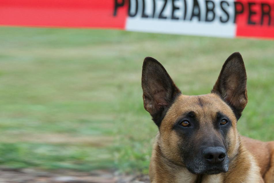 Polizei erschießt drei freilaufende Hunde