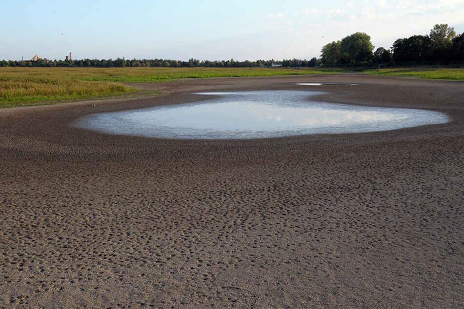 Der Elsterstausee im Jahr 2009 - fast ausgetrocknet. Die Stadt will den See nicht mehr befüllen, sondern das Gebiet anderweitig entwickeln.