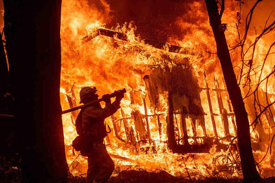 In Kalifornien wüten derzeit schlimme Waldbrände, die auch schon mehr als 40 Opfer forderten.