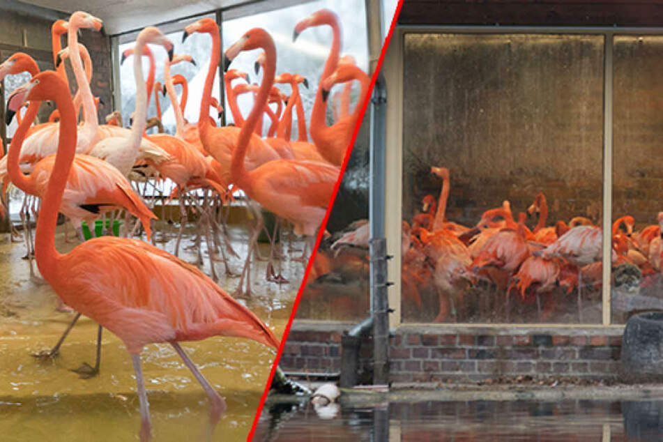 Stallpflicht wegen Vogelgrippe! 14 tote Tiere im Dresdner Zoo