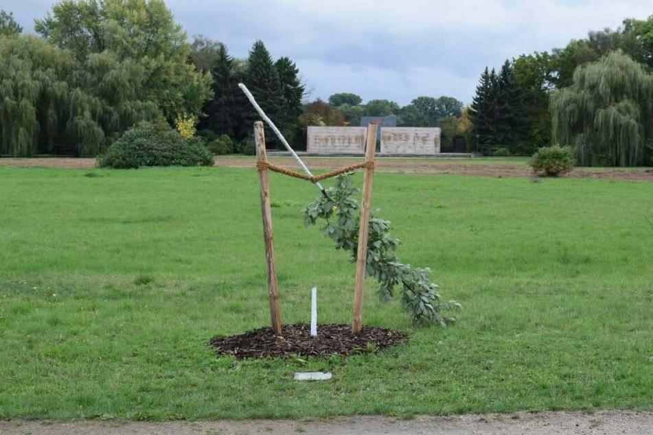 Am Wochenende hatten Unbekannte den Gedenkbaum abgesägt.