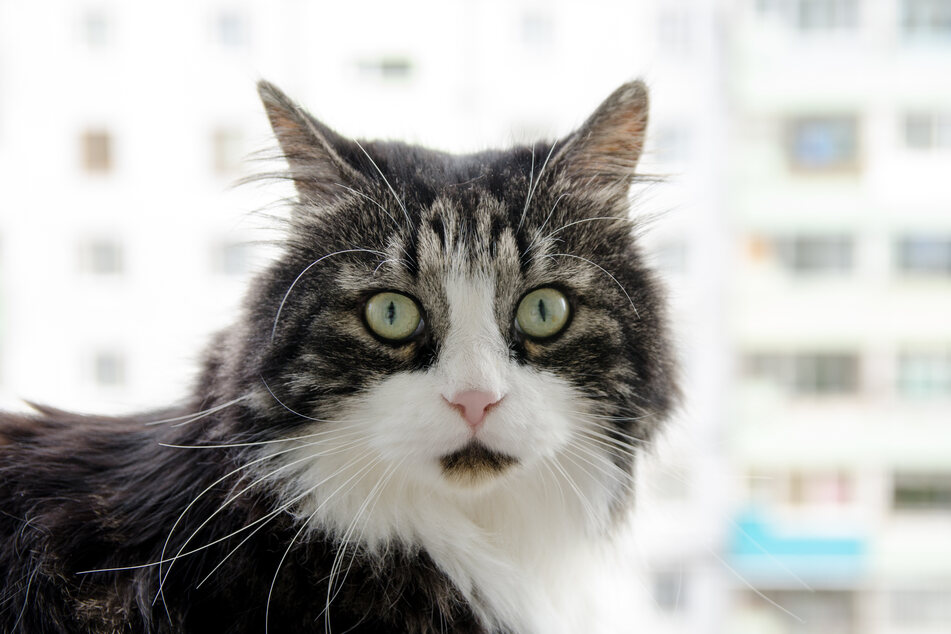 The cat fell from the sixth floor of an apartment building onto the head of the man. (stock image)