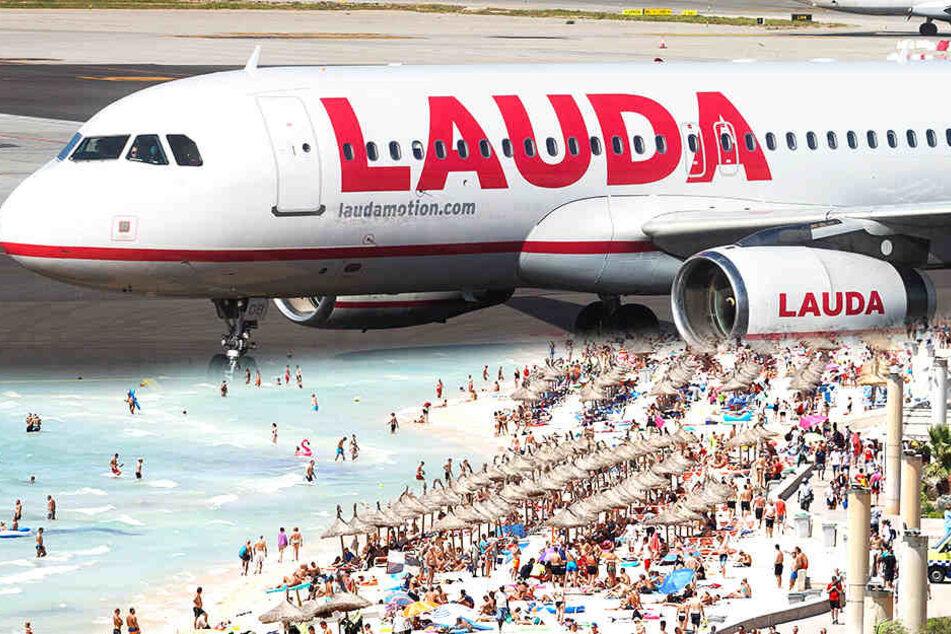 Diese Airline macht's möglich! Für 19,99 Euro geht's ab Sommer von Dresden nach Mallorca