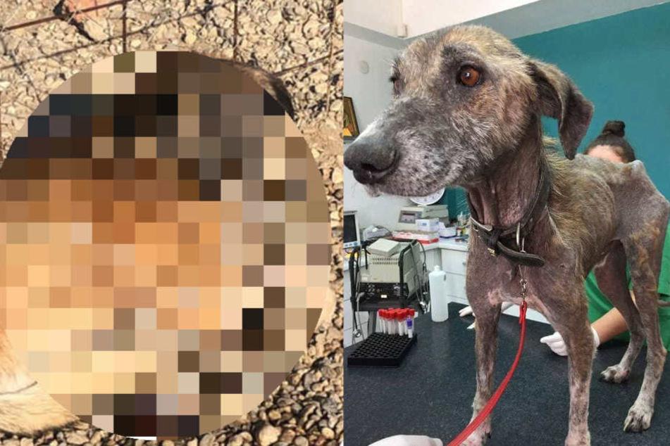 Hund nicht wiederzuerkennen: So sehr hat er sich verändert