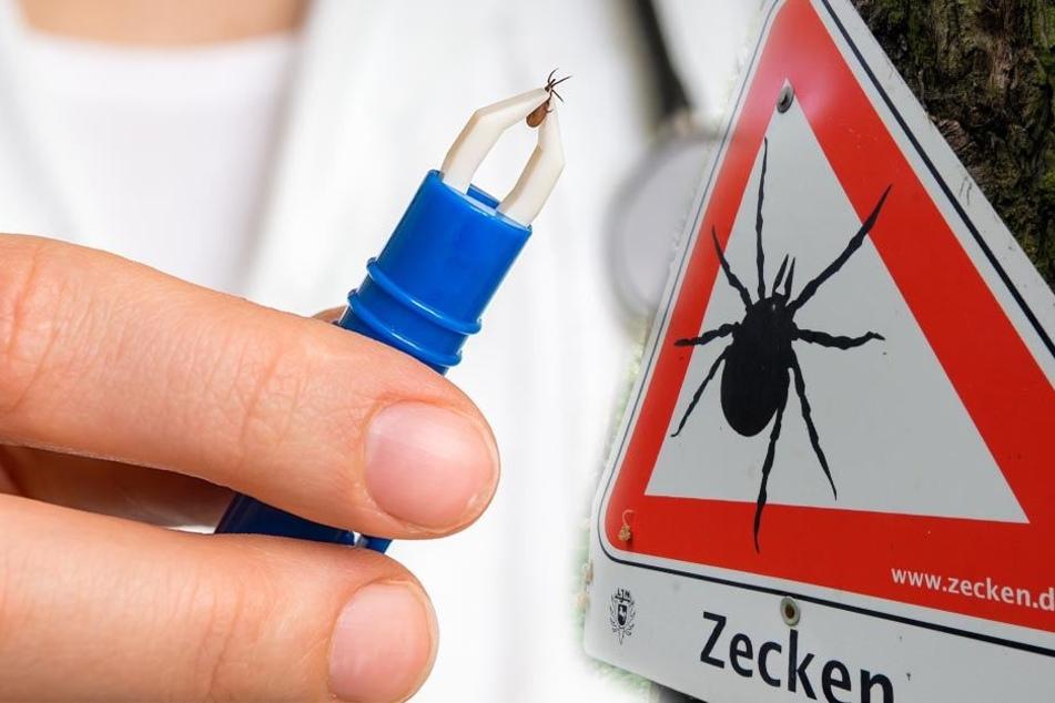 Zecken-Alarm in Westsachsen: FSME-Risiko steigt!