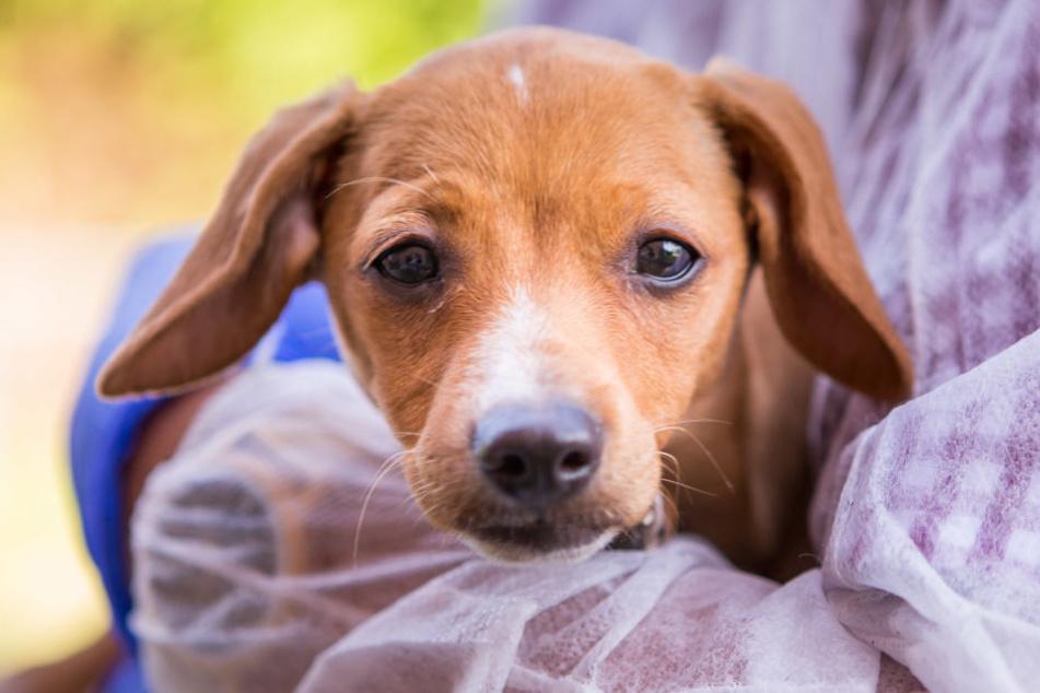 Wurde von Kindern fast zu Tode gequält: Hunde-Mädchen Nina.