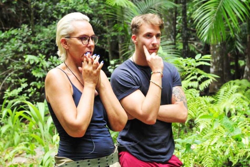 Die Ex von Ochsenknecht (li.) und Kavalier David Friedrich rätseln, wer der dümmste Star im Camp ist - die Wahl fällt auf Jenny, die Schwester einer Prominenten!