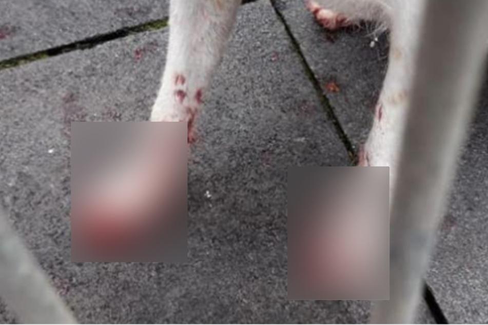 Zwei Hunde haben sich an Glasscherben verletzt.