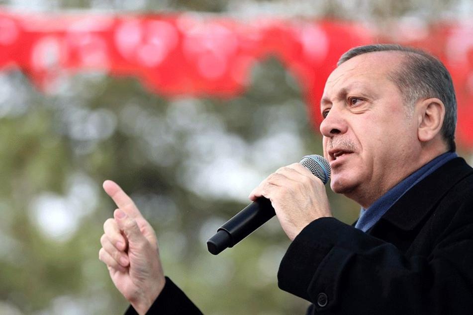 Zu dumm? Erdogan traut türkischen Schülern die Evolutionstheorie nicht mehr zu!