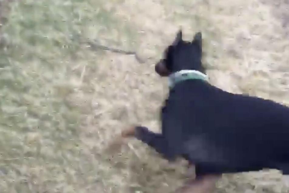 Der Moment, in dem der Hund die Schlange erblickt.