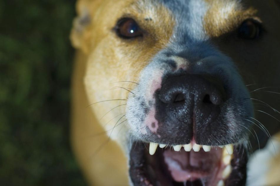 Männer hetzen Hund auf Türken