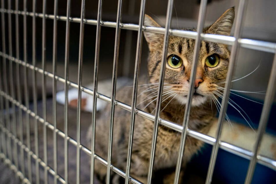 Die Katze wurde in einer Transportbox mit ins Polizeirevier gebracht.
